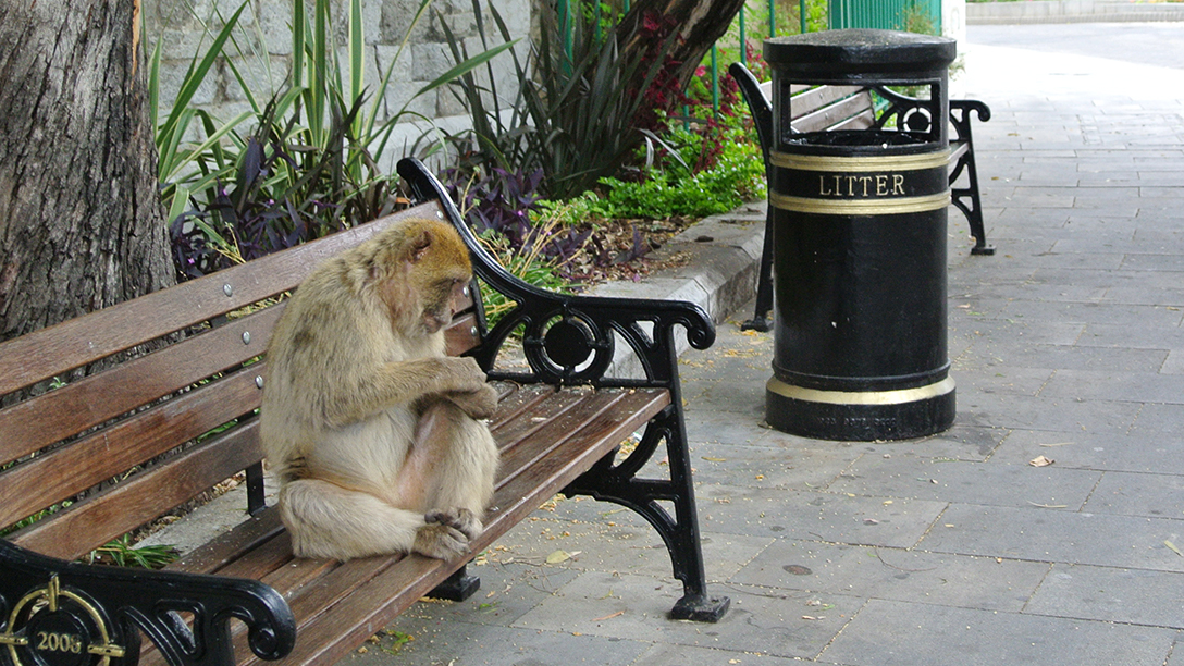 A monkey sits on a park bench in Gibraltar