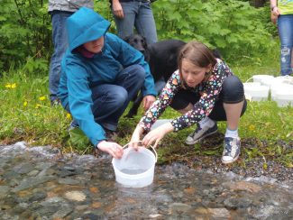 Releasing chinook fry into the Quesnel River