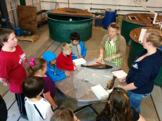 Judy Hillaby - salmon dissection with Likely Elementary School