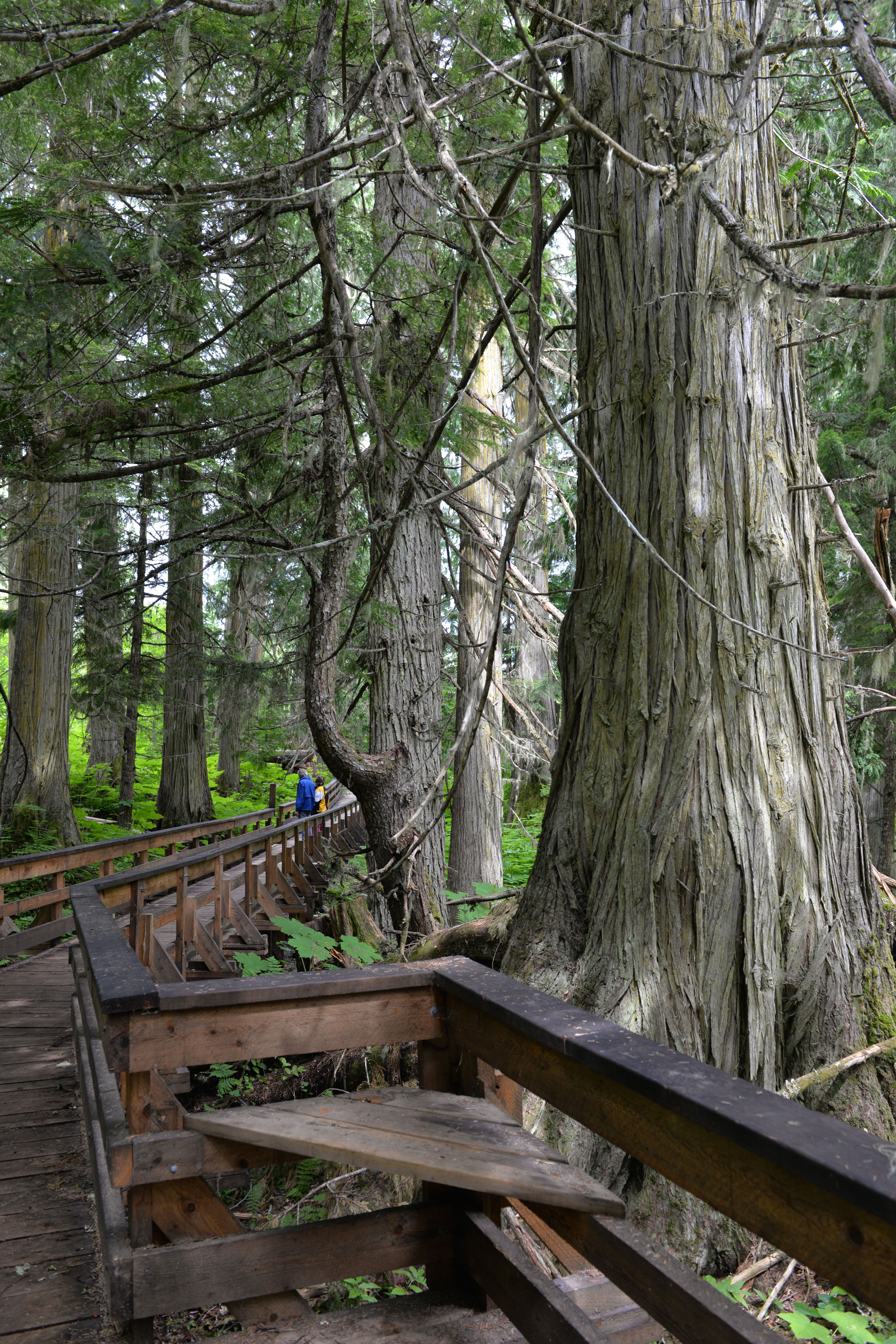 Nowell Senior Accessibility Trail, Ancient Forest