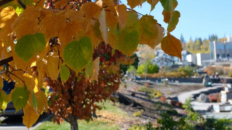 UNBC campus, fall colours