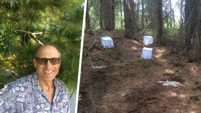 Dr. Phil Burton and one of his experimental set ups, logs placed in a forested area.