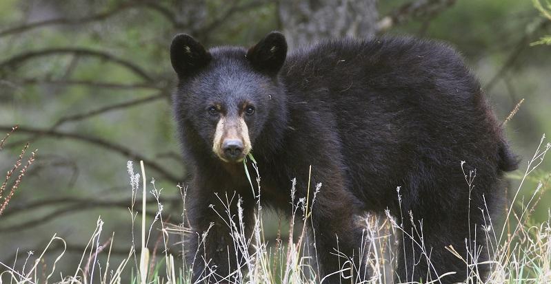 wildlife monitoring certificate unbc