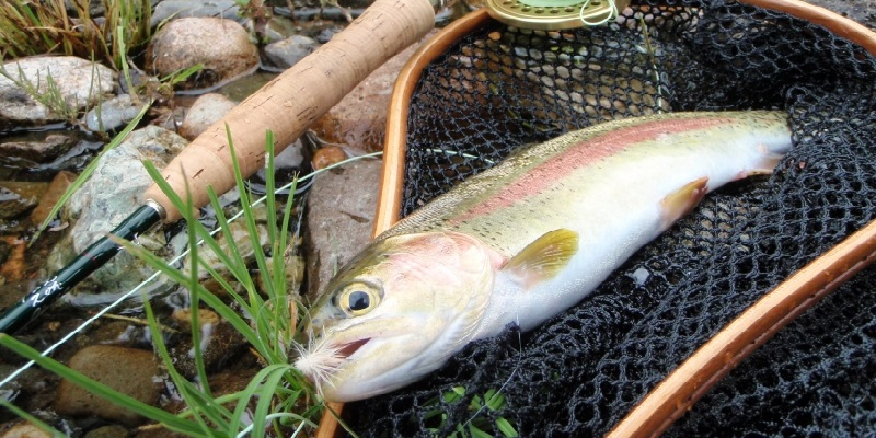 fly fishing courses prince george bc