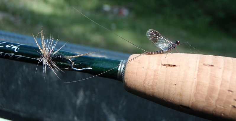 fly fishing entomology course