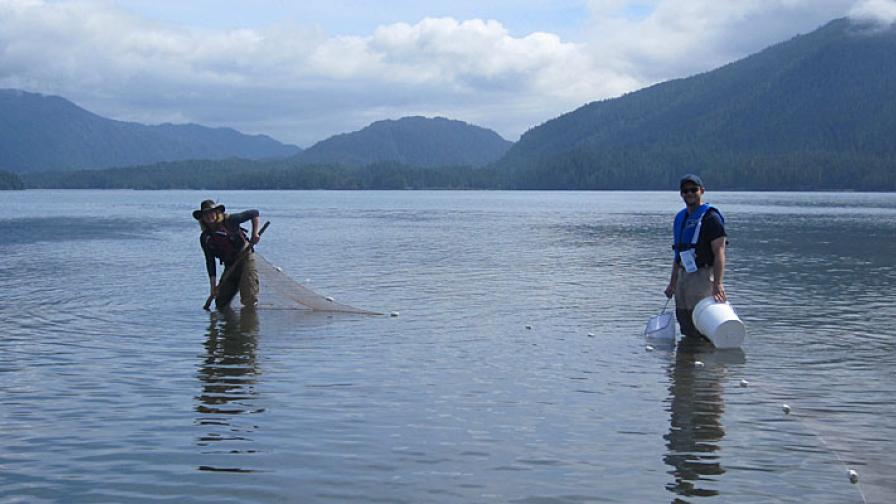 UNBC researchers seine on sandy beaches