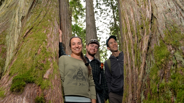 UNBC students look trough trees in the Ancient Forest