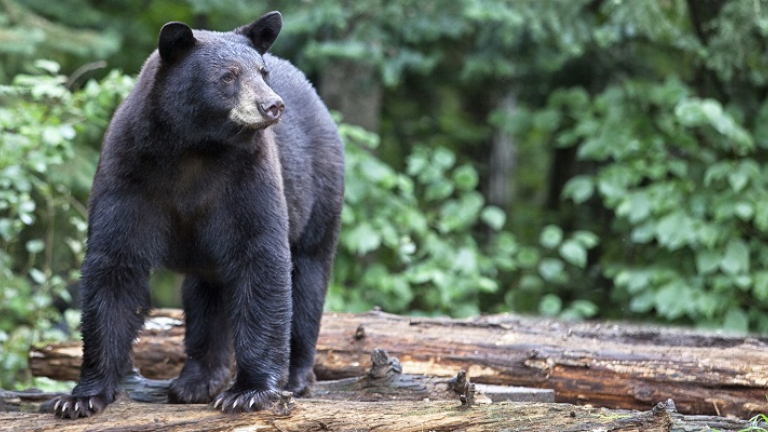 bear awareness safety course online