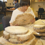 """Kathy Lewis examining wood """"cookies"""" cut from lodgepole pine killed by mountain pine beetle for a study that examined the change in wood properties post mortality."""