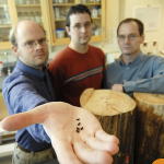 Brian Aukema (former UNBC faculty) holds out a pine beetle, along with Dezene Huber and Brent Muray.