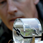 Arthur Fredeen (Professor at UNBC) looks at a clear gas-exchange chamber that is used to measure CO2 and H2O vapour fluxes in conifer branches as well as other plants.