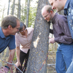 Kathy Lewis, Brian Aukema, Brent Murray and Dezene Huber examining lodgepole pine tree killed by mountain pine beetle. Theywere all part of a large team studying pine beetle genomics and feedstock supply.