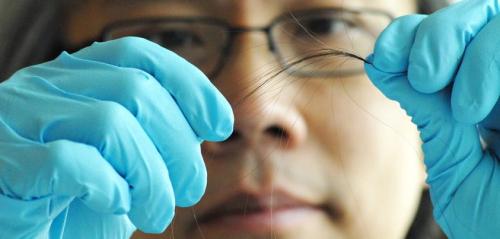 Researcher analyzing hair