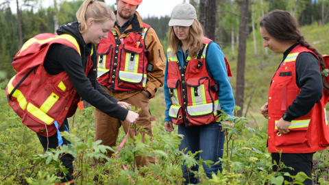 Students conduct research at the Aleza Lake Research Forest
